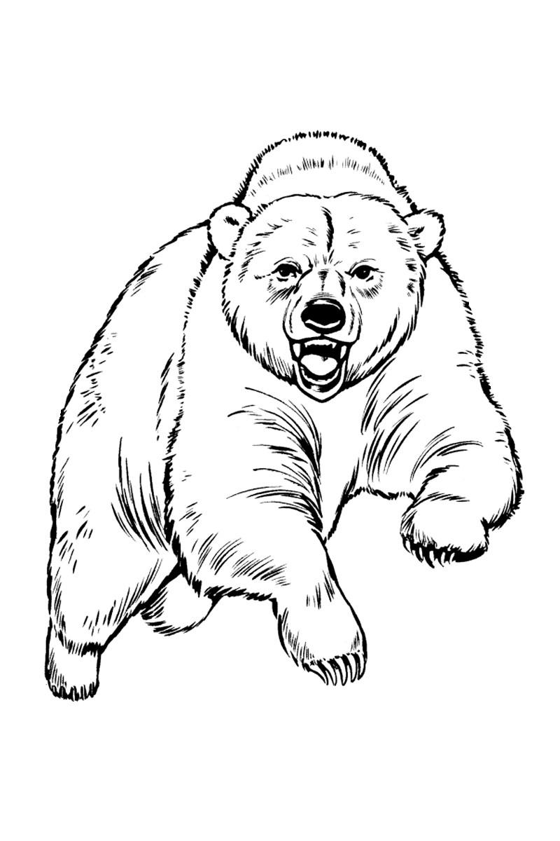 Раскраска медведь гризли