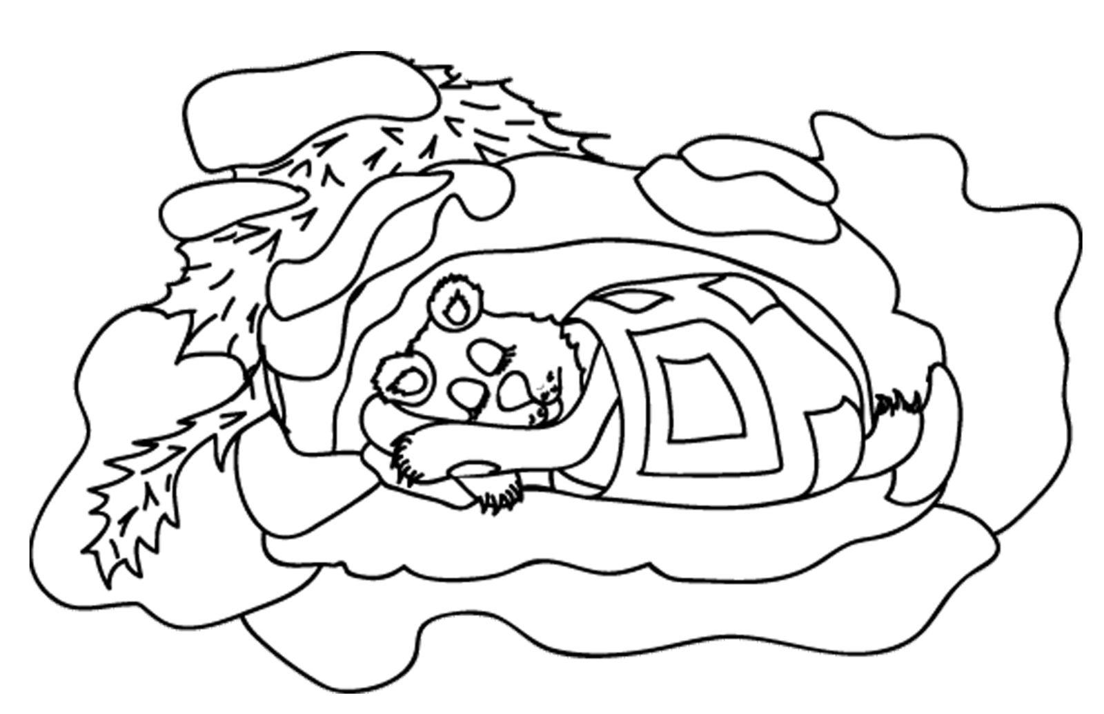 раскраска медведь 19