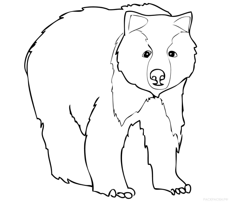 медведь удивлённый