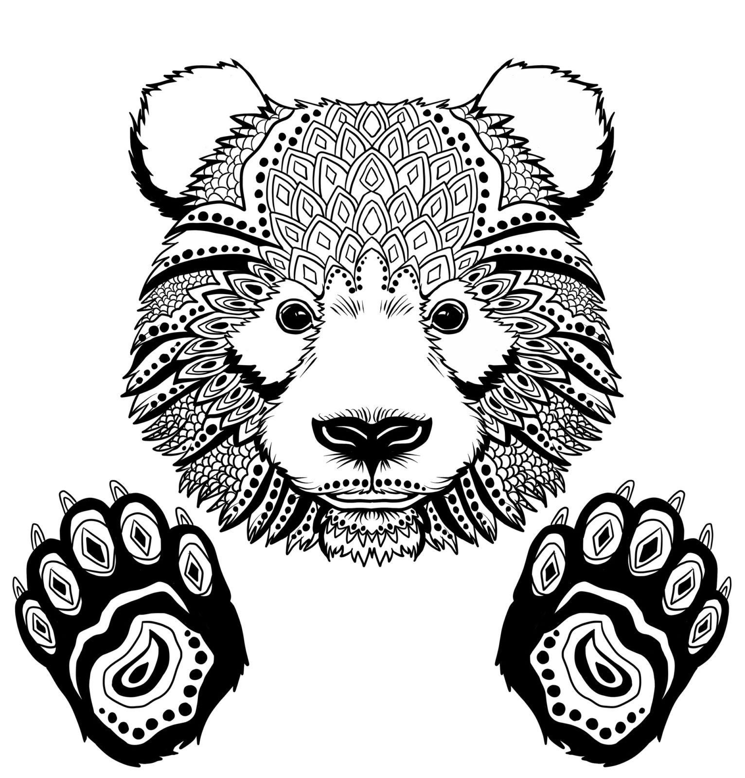 голова медведя фото 4