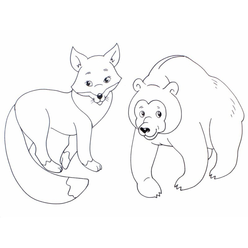 медведь и лиса фото 14