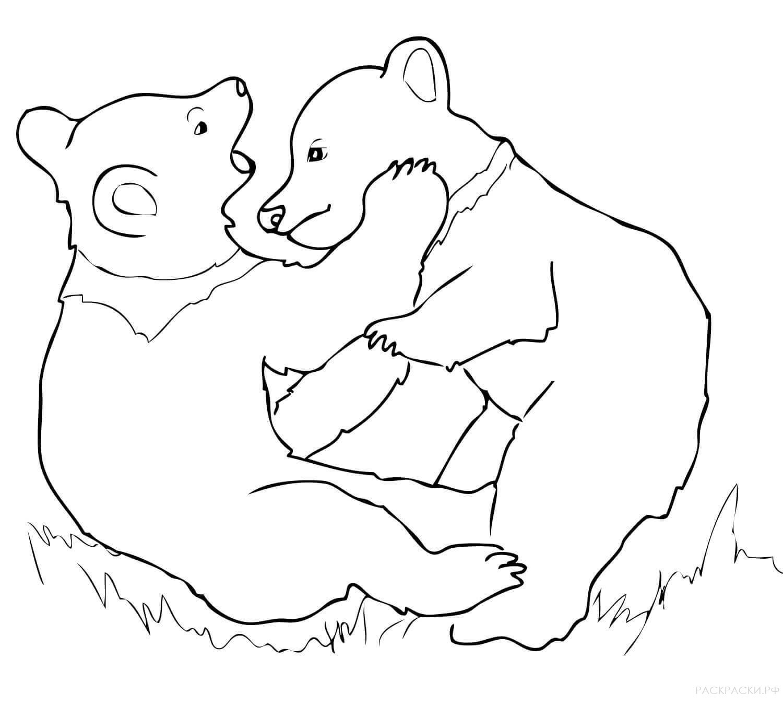 медвежата фото