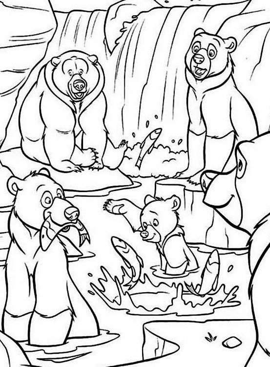 медведи рыбу ловят