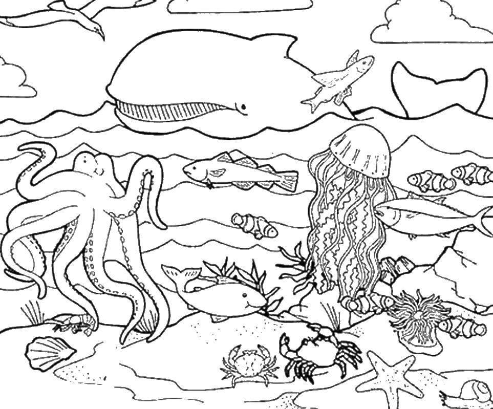 Раскраска кит 10