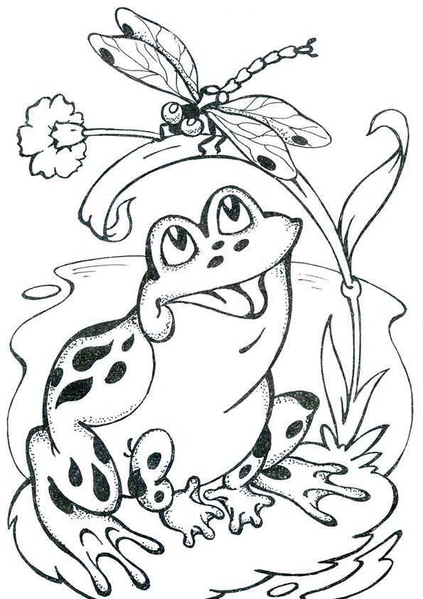 лягушка и стрекоза фото