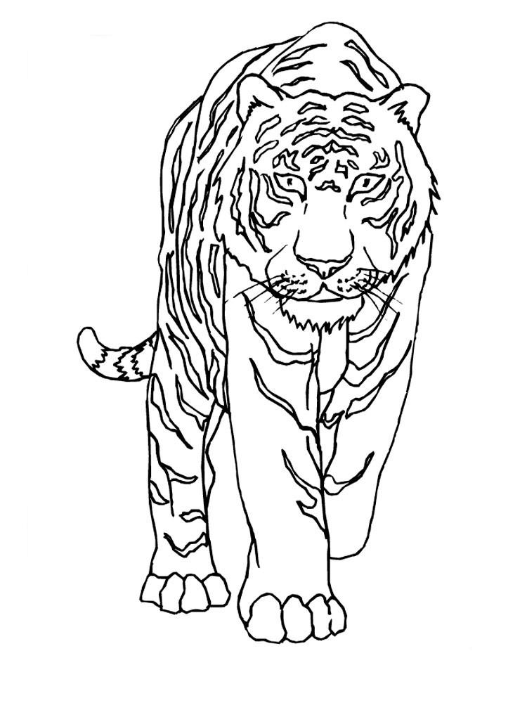 тигр в анфас