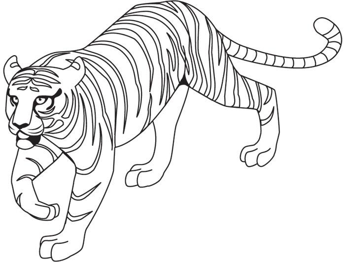 Раскраска тигр 29