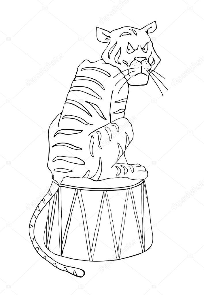 Испуганный тигр