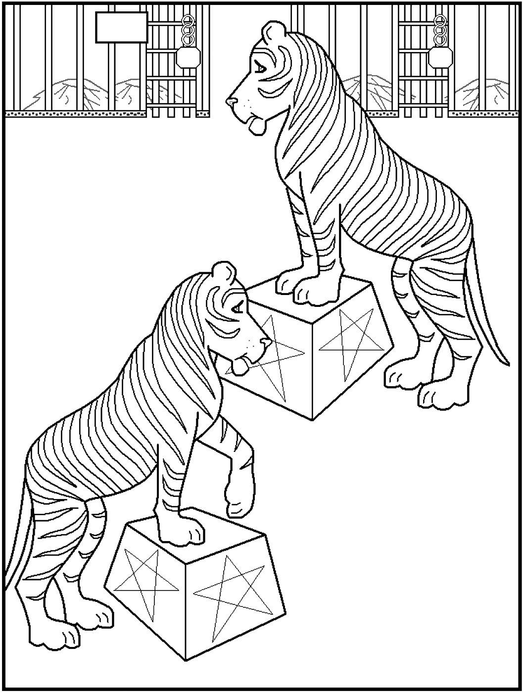 тигры в цирке 11
