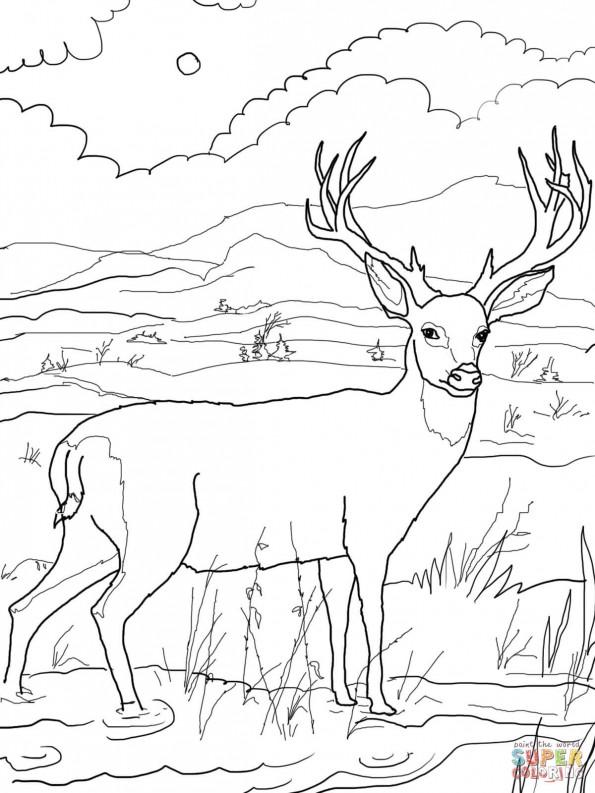 Раскраска олень 23