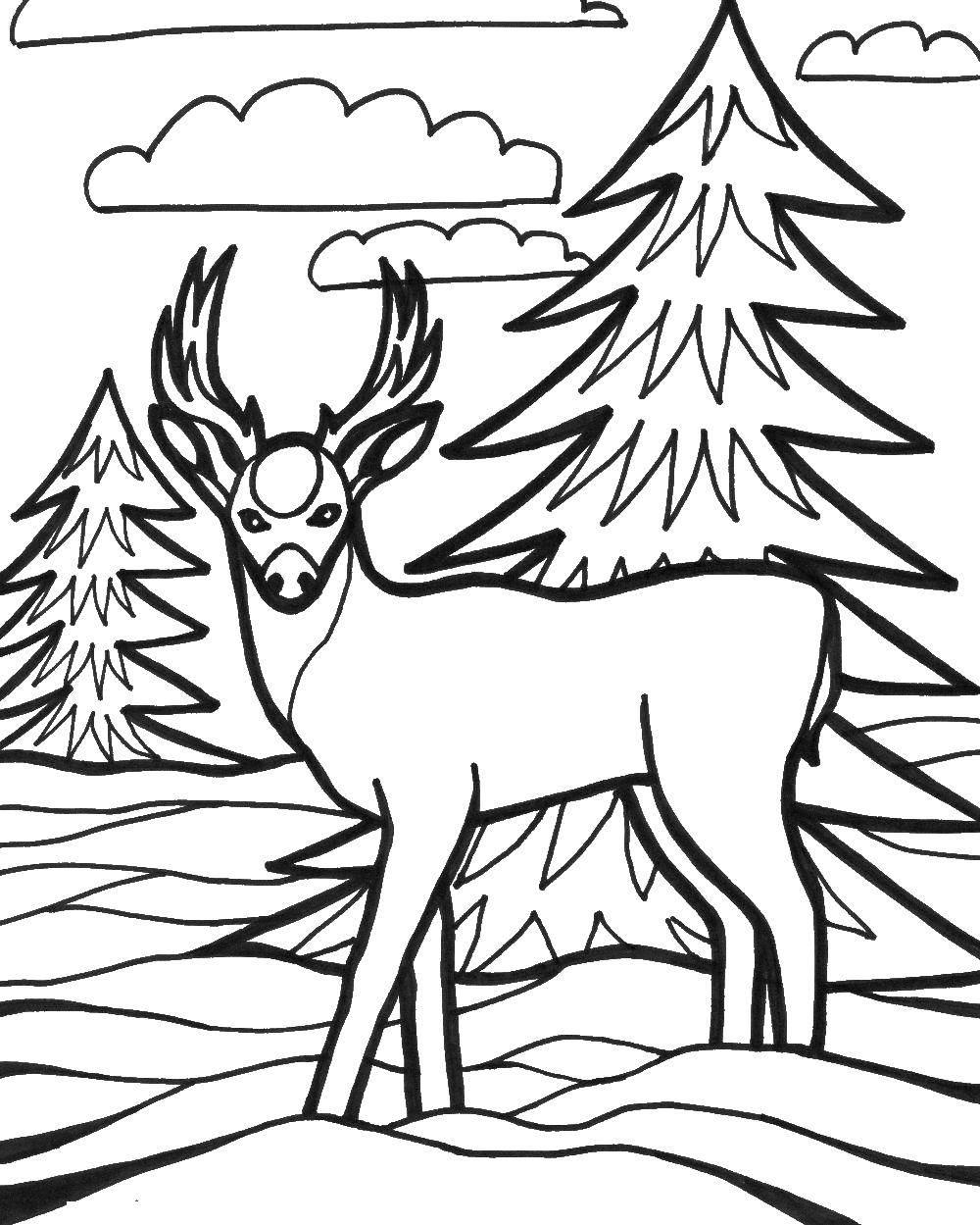 Раскраска олень 10