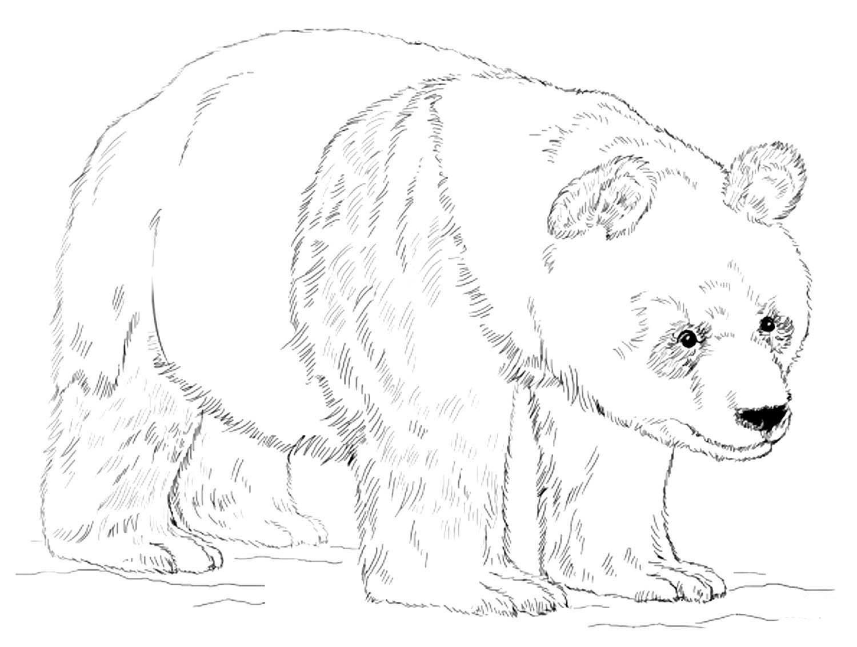 Бамбуковый медведь 31
