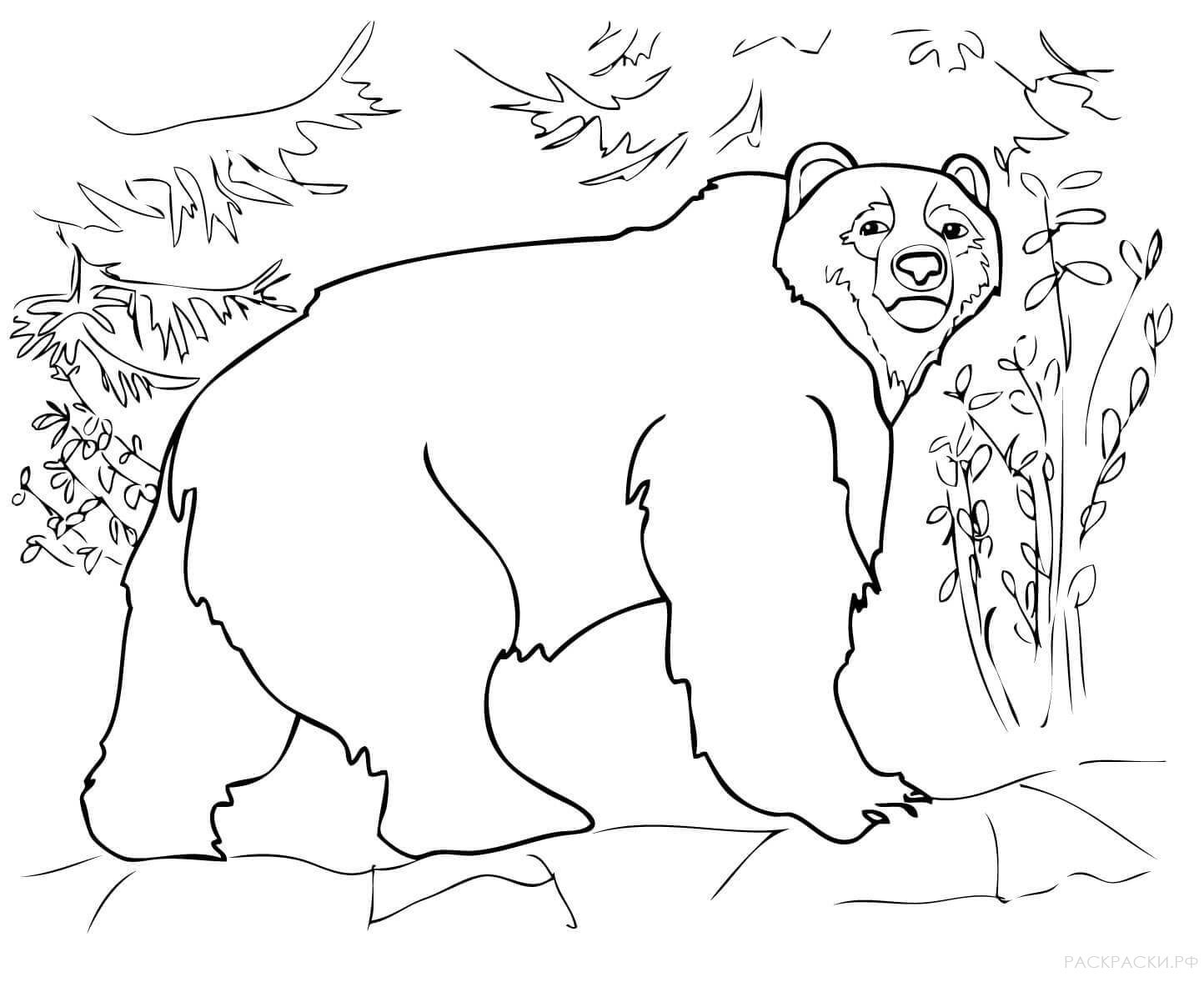 Бурый медведь 44