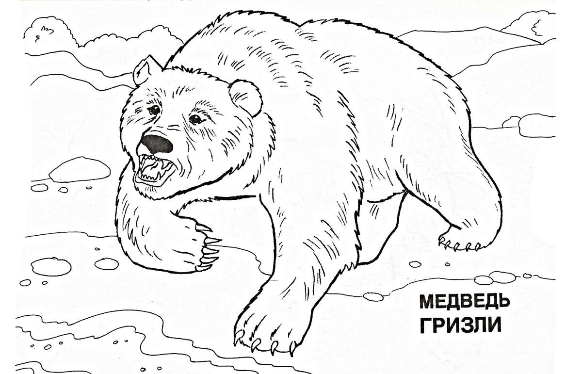 Медведь Гризли 45
