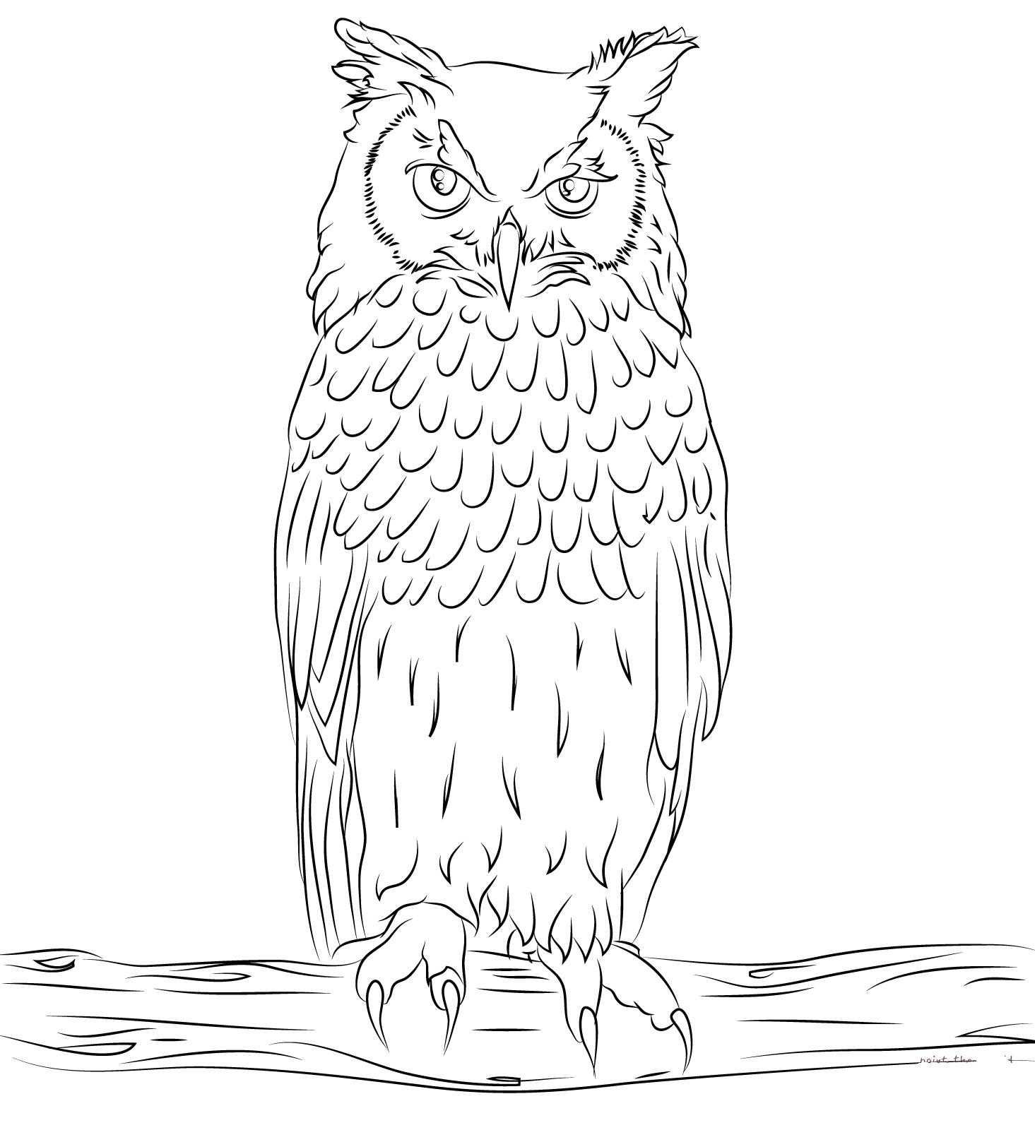 Раскраска сова | andrey-eltsov.ru