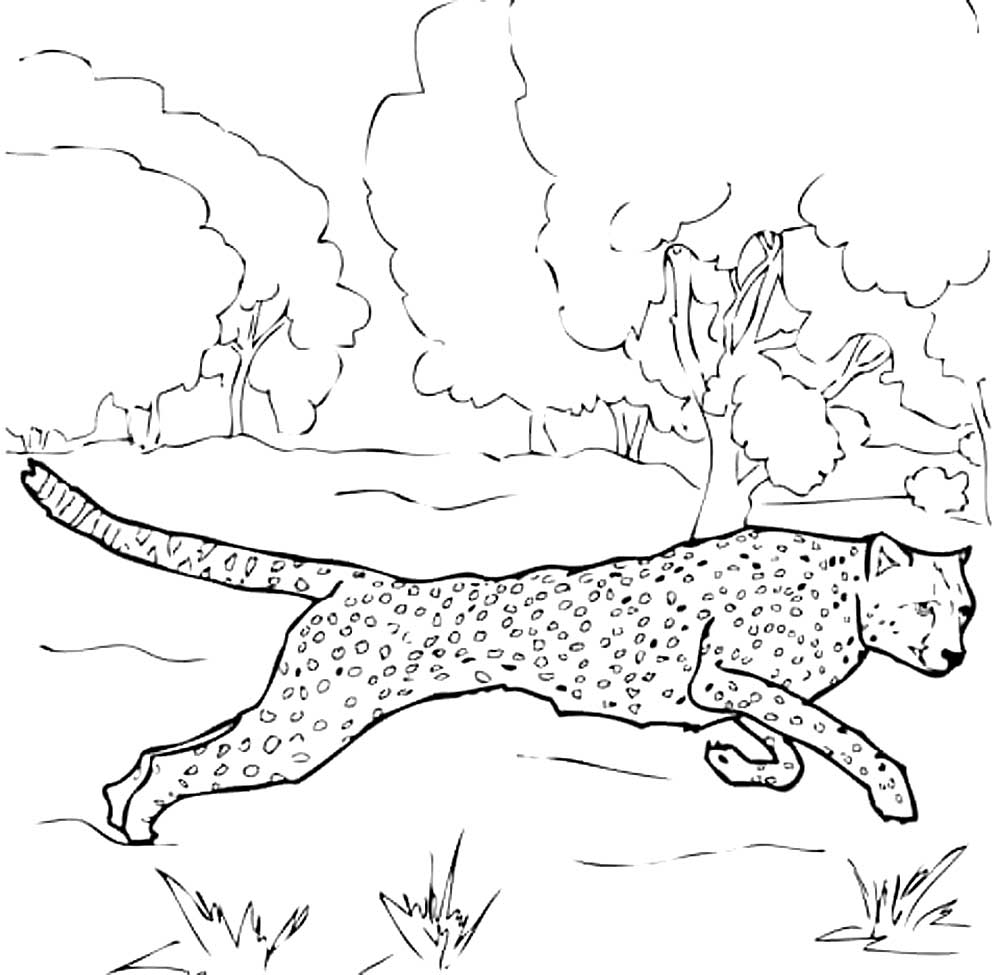 Леопард бежит