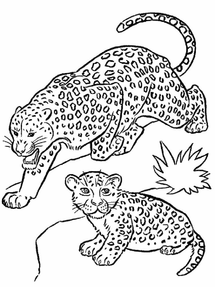 раскраска леопард 9