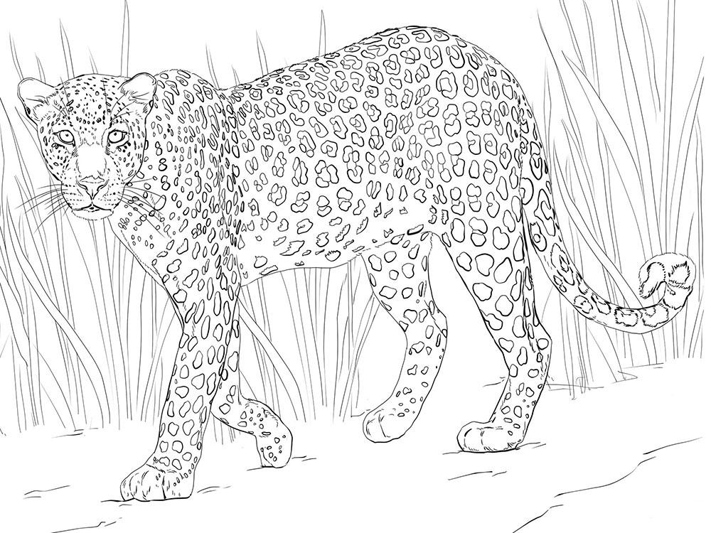 дальневосточный леопард фото 3