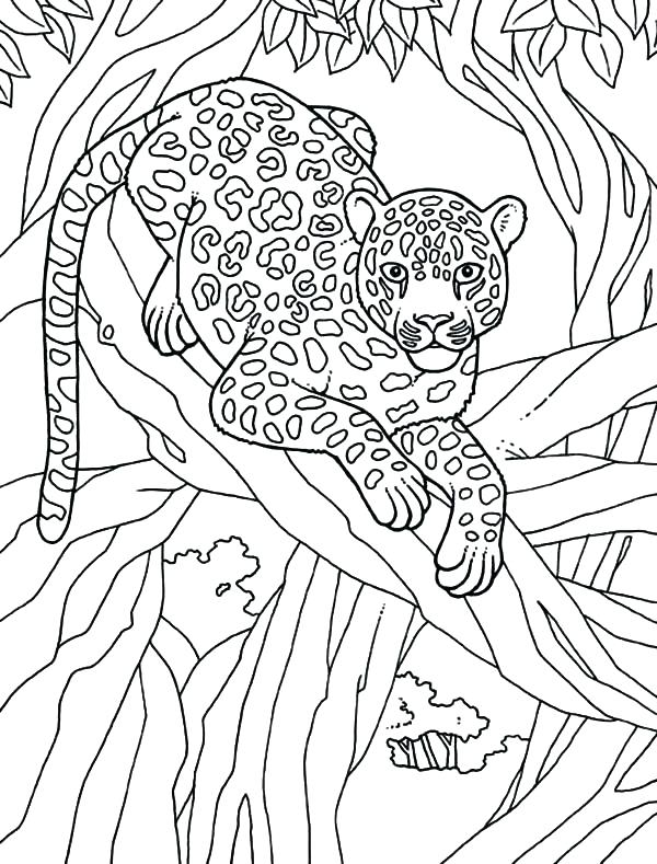 Раскраска леопард 26