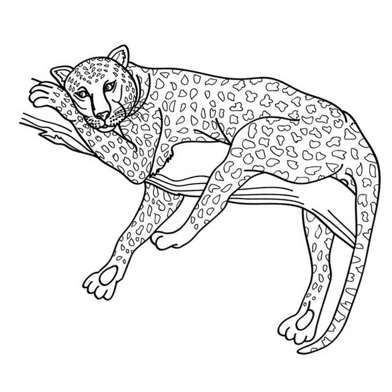 раскраска леопард 5