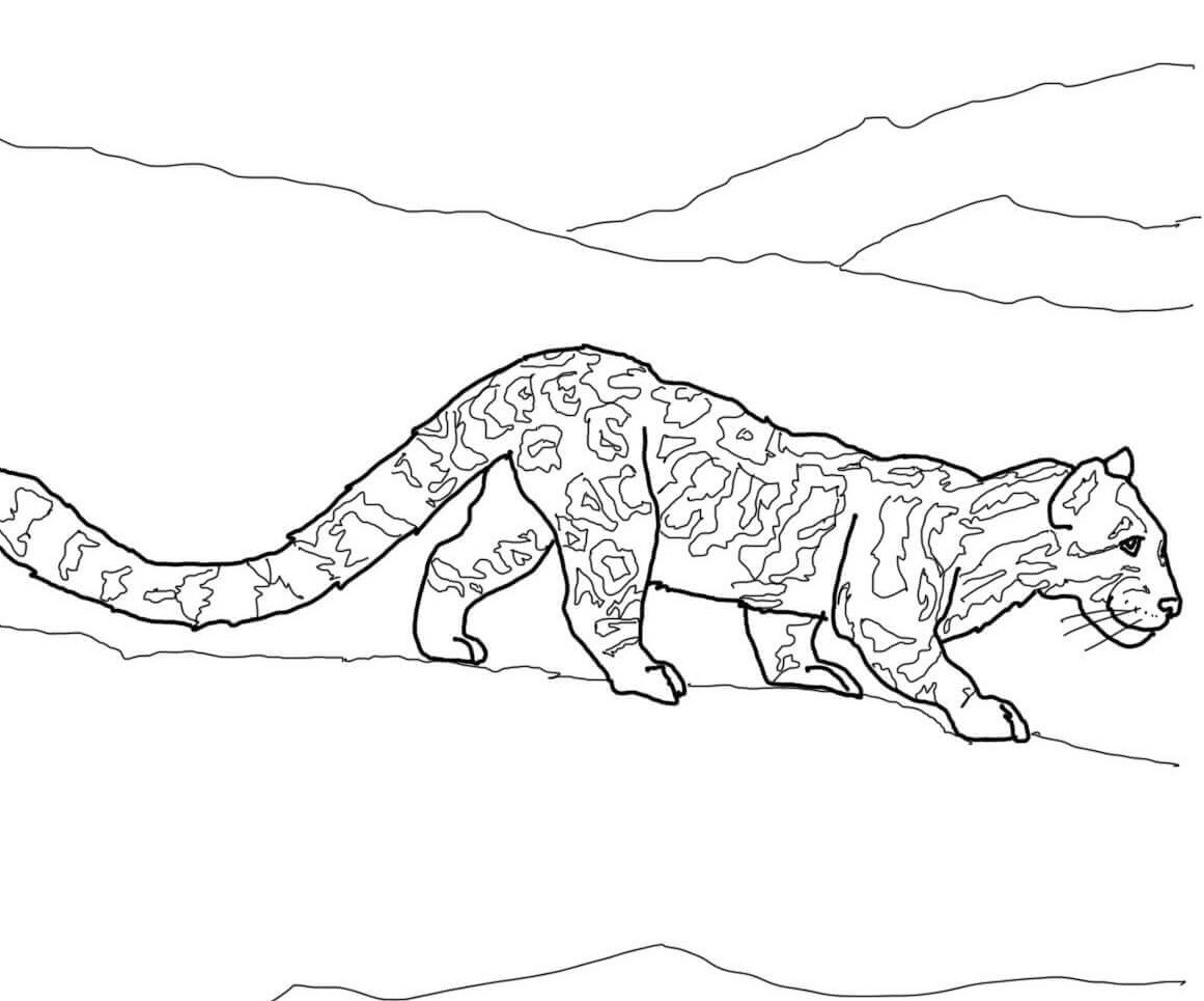 снежный леопард фото