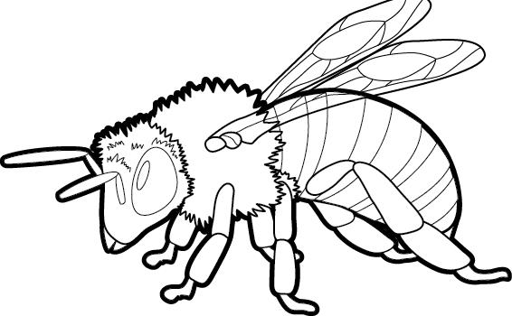 хмурая пчела