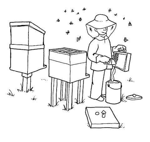 Раскраска пчеловод