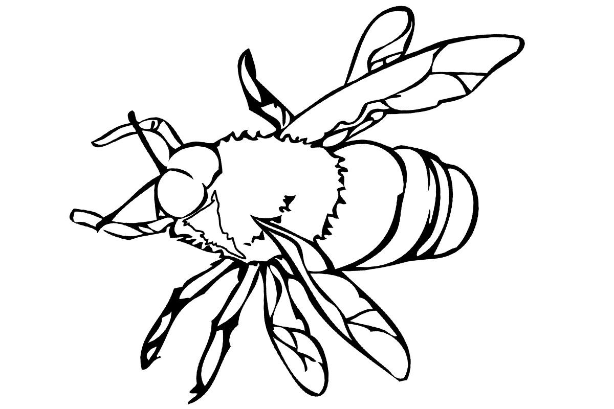 пчела фото 47