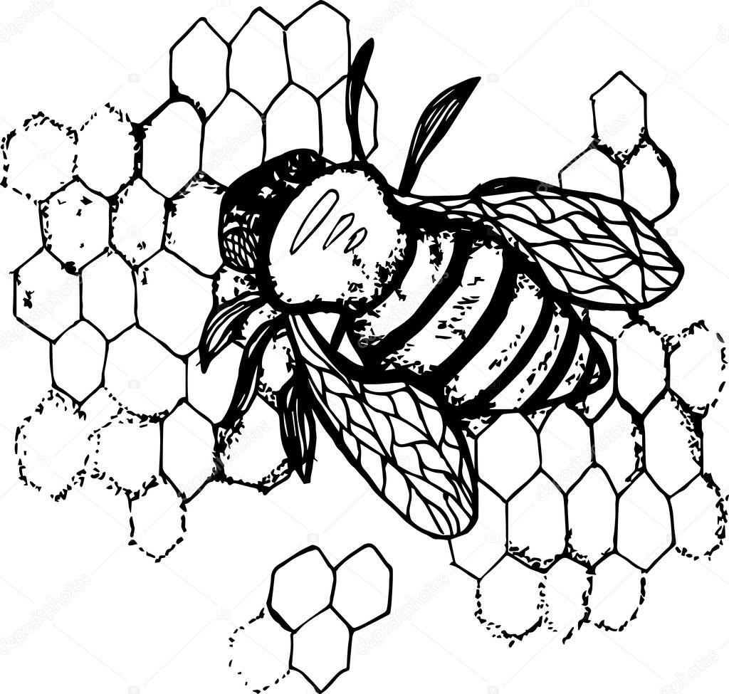 Раскраска пчела 222