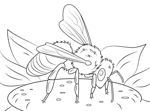 Пчела на цветке 4