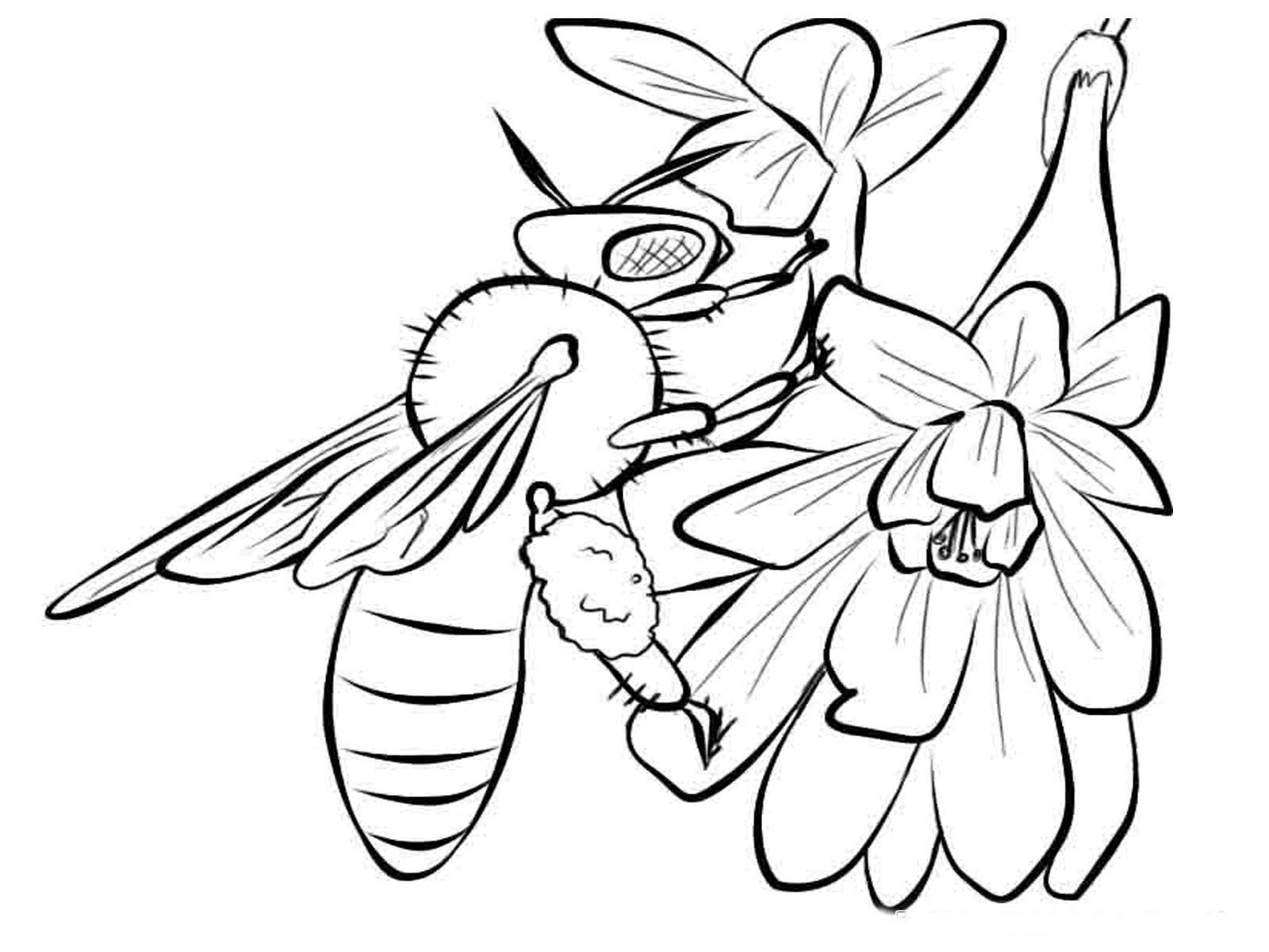 Пчела на цветке 21