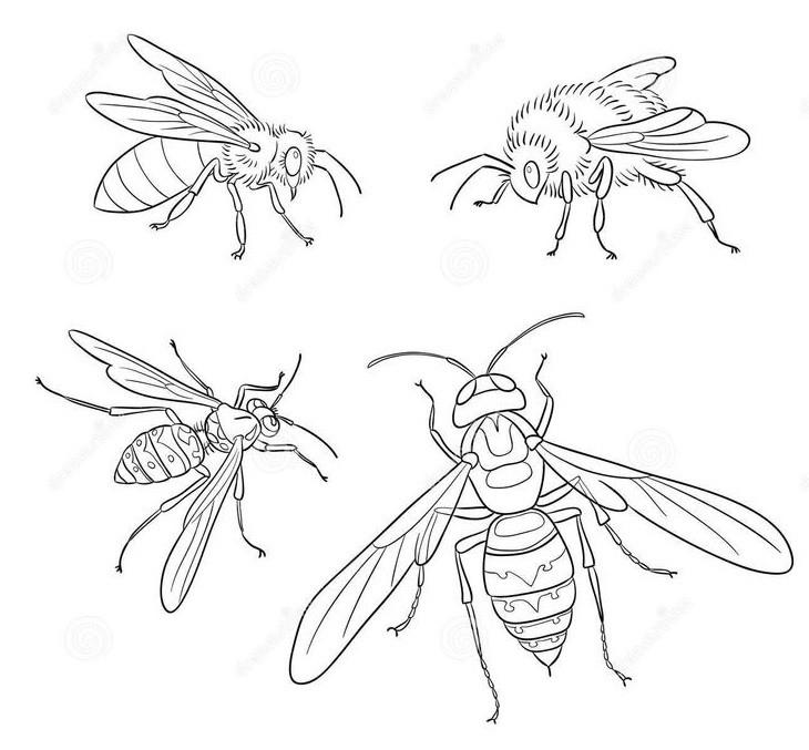 Раскраска пчёлы 4
