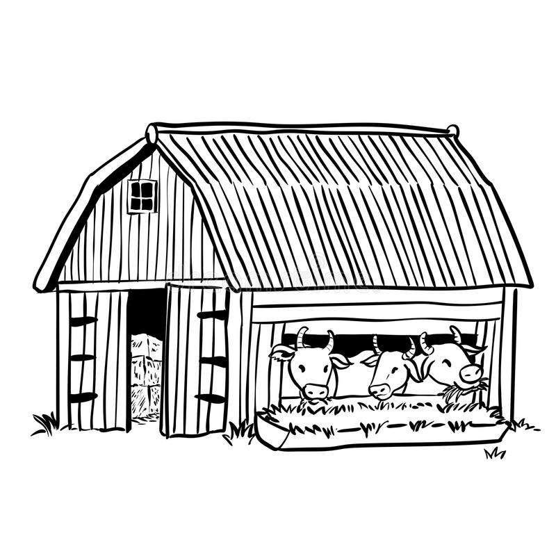 коровы в коровнике