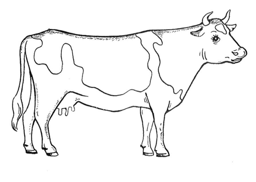 реальная корова 12