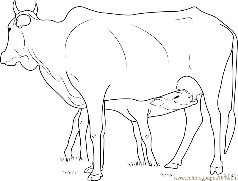 Корова с телёнком 31