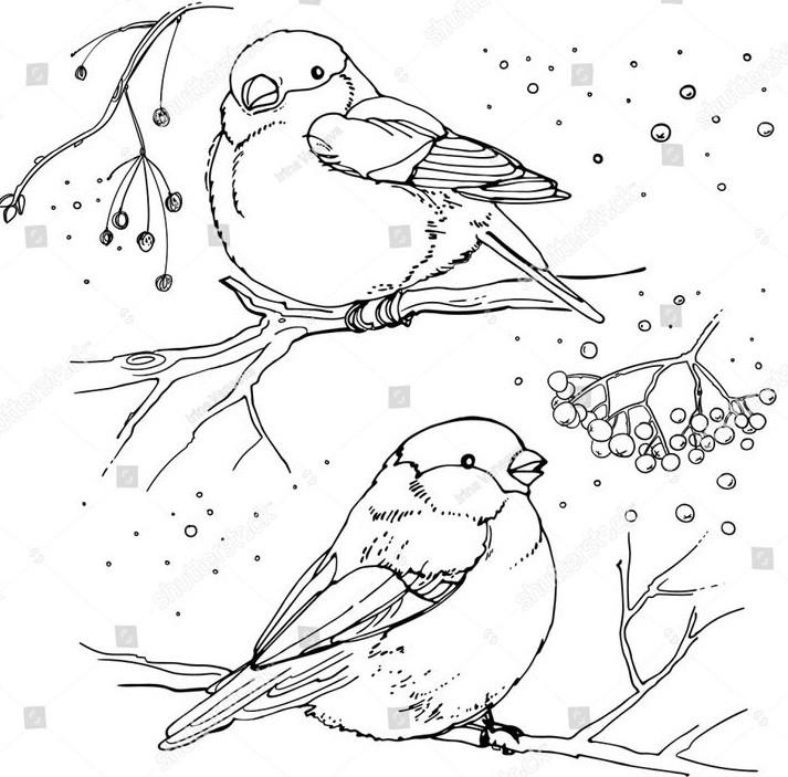 Два снегиря