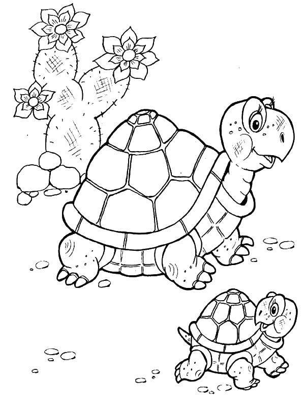 Черепаха с черепашонком