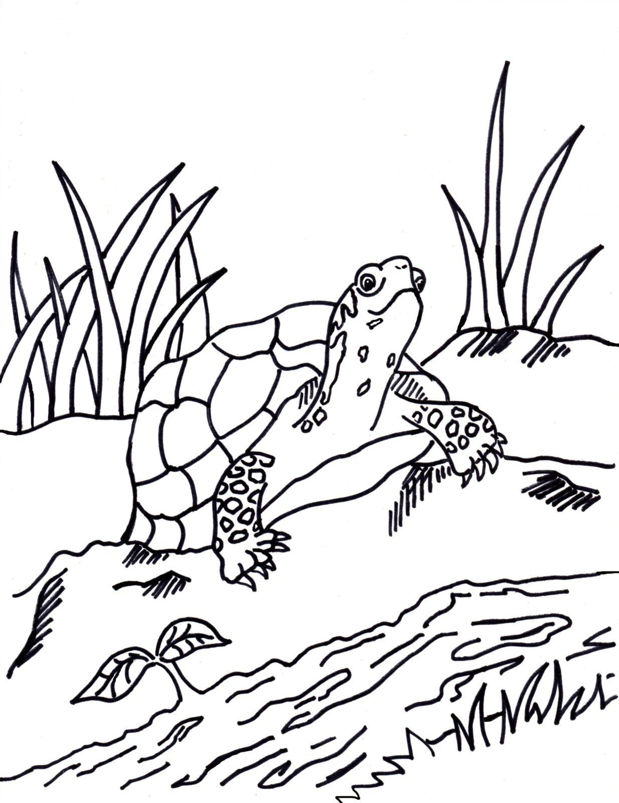 черепаха у ручья
