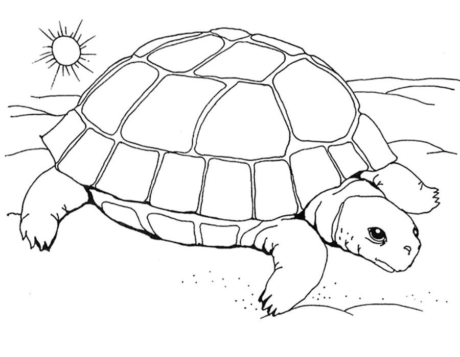 Черепаха в пустыне
