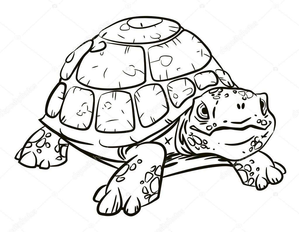 черепаха для раскраски