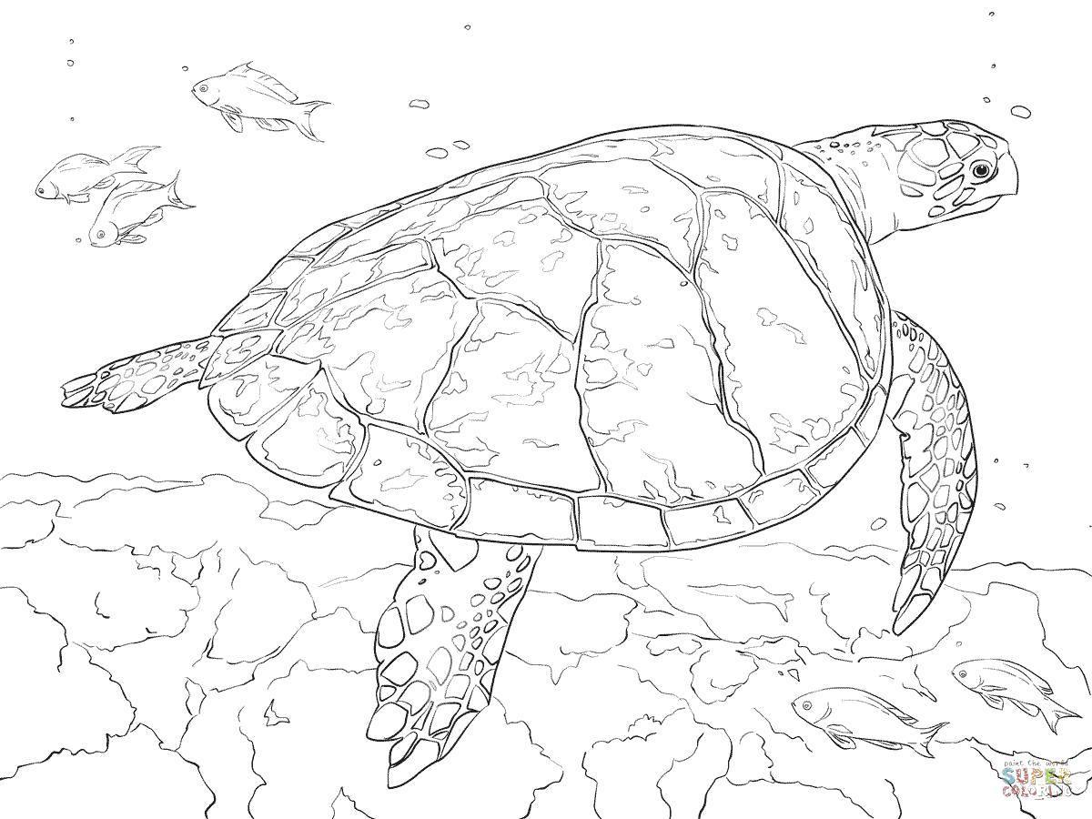 морская черепаха фото 5