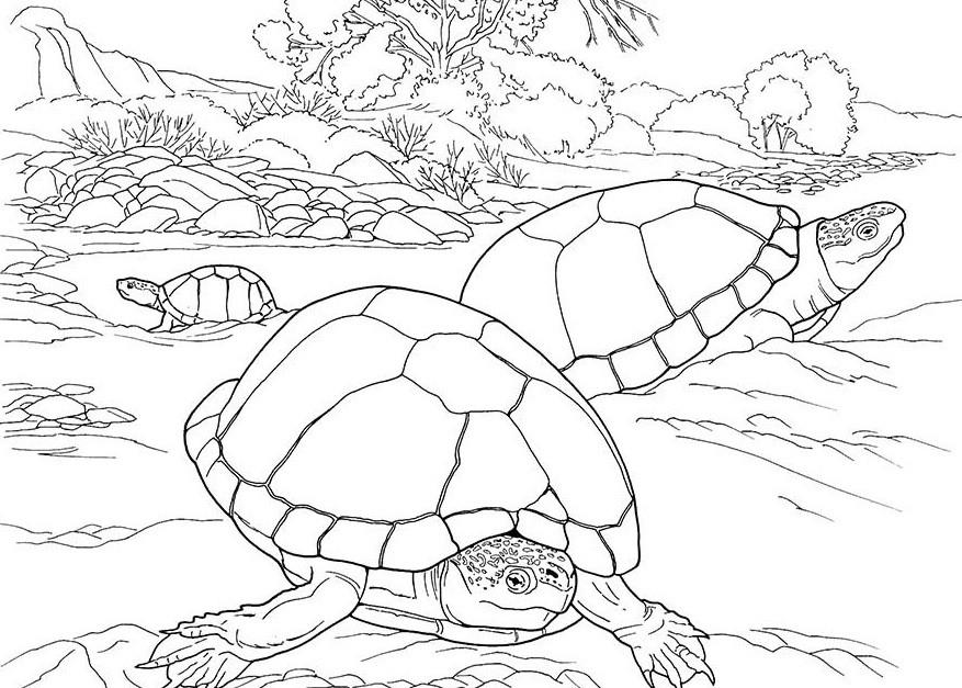 черепахи у озера