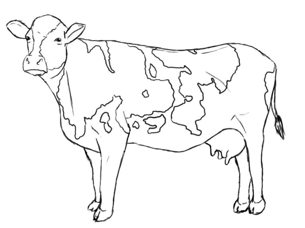 холмогорская корова для раскраски