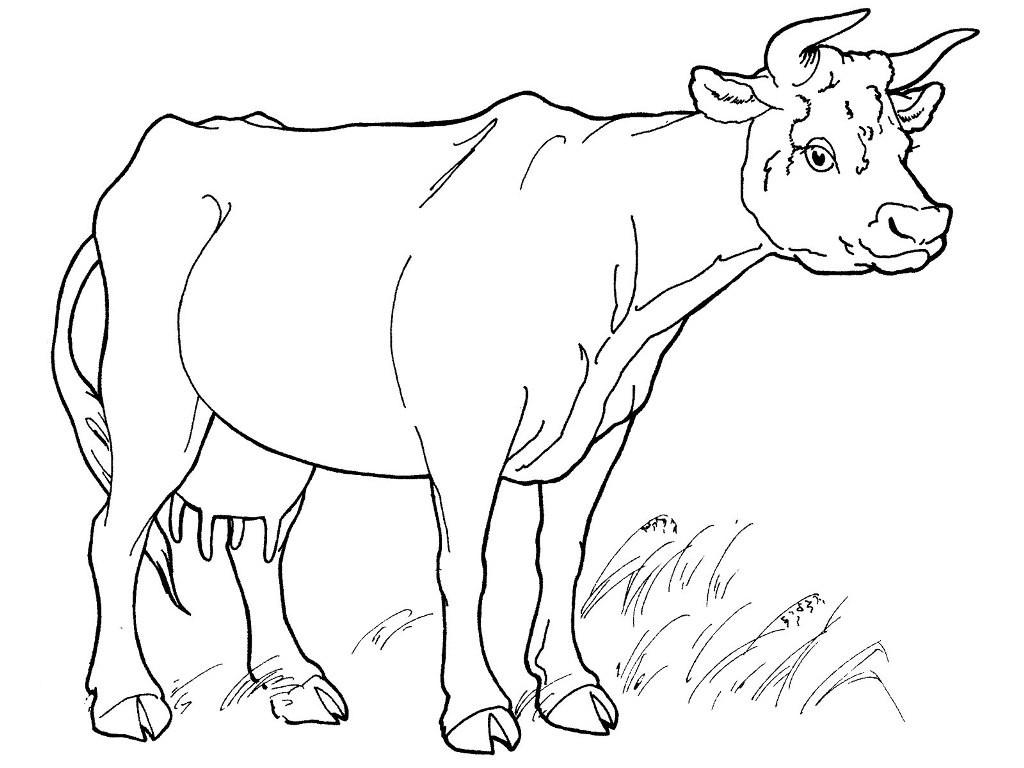раскраска корова 5