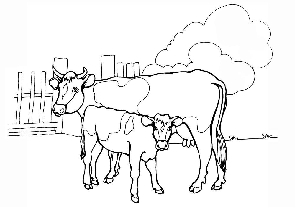Корова с телёнком 11