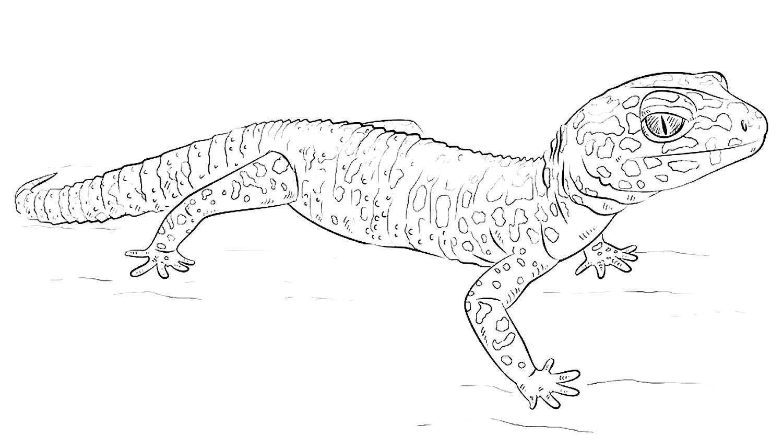 геккон для раскраски