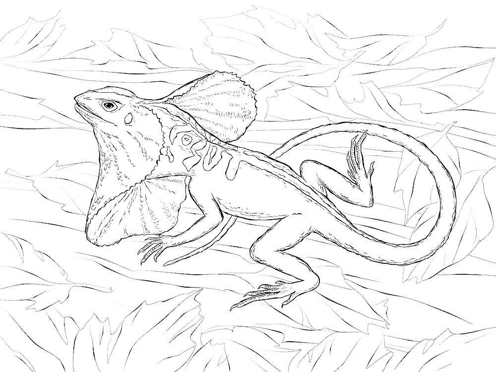 Раскраска ящерица 24