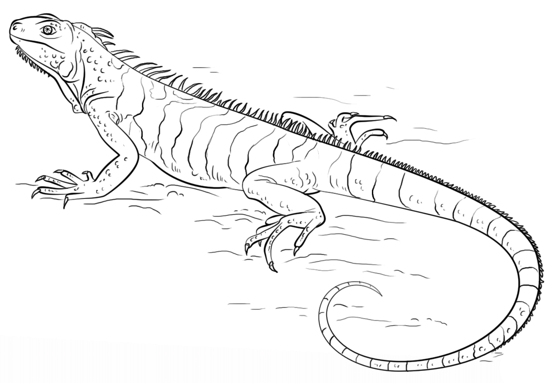Раскраска ящерица 19