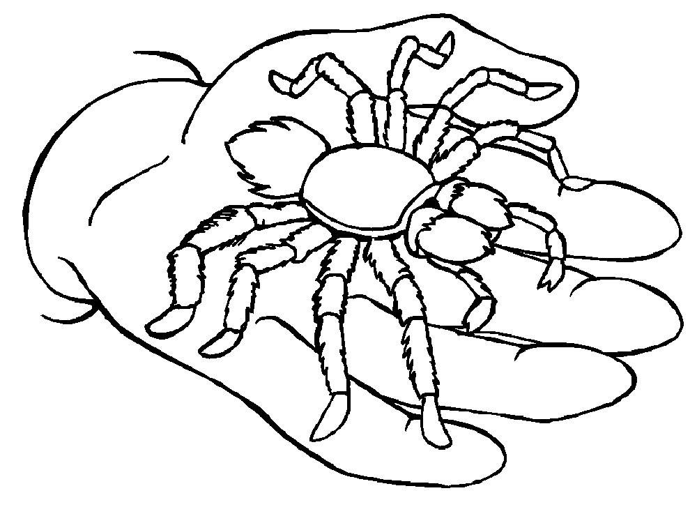 Раскраска паук 7