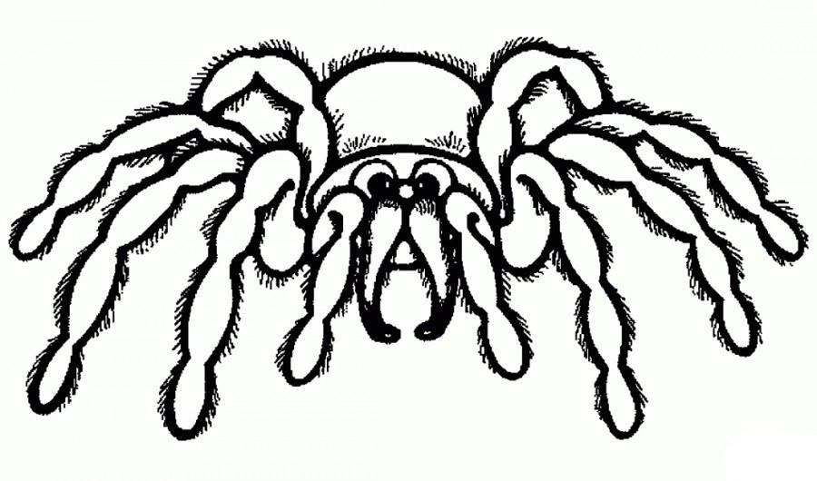 раскраска паук 4